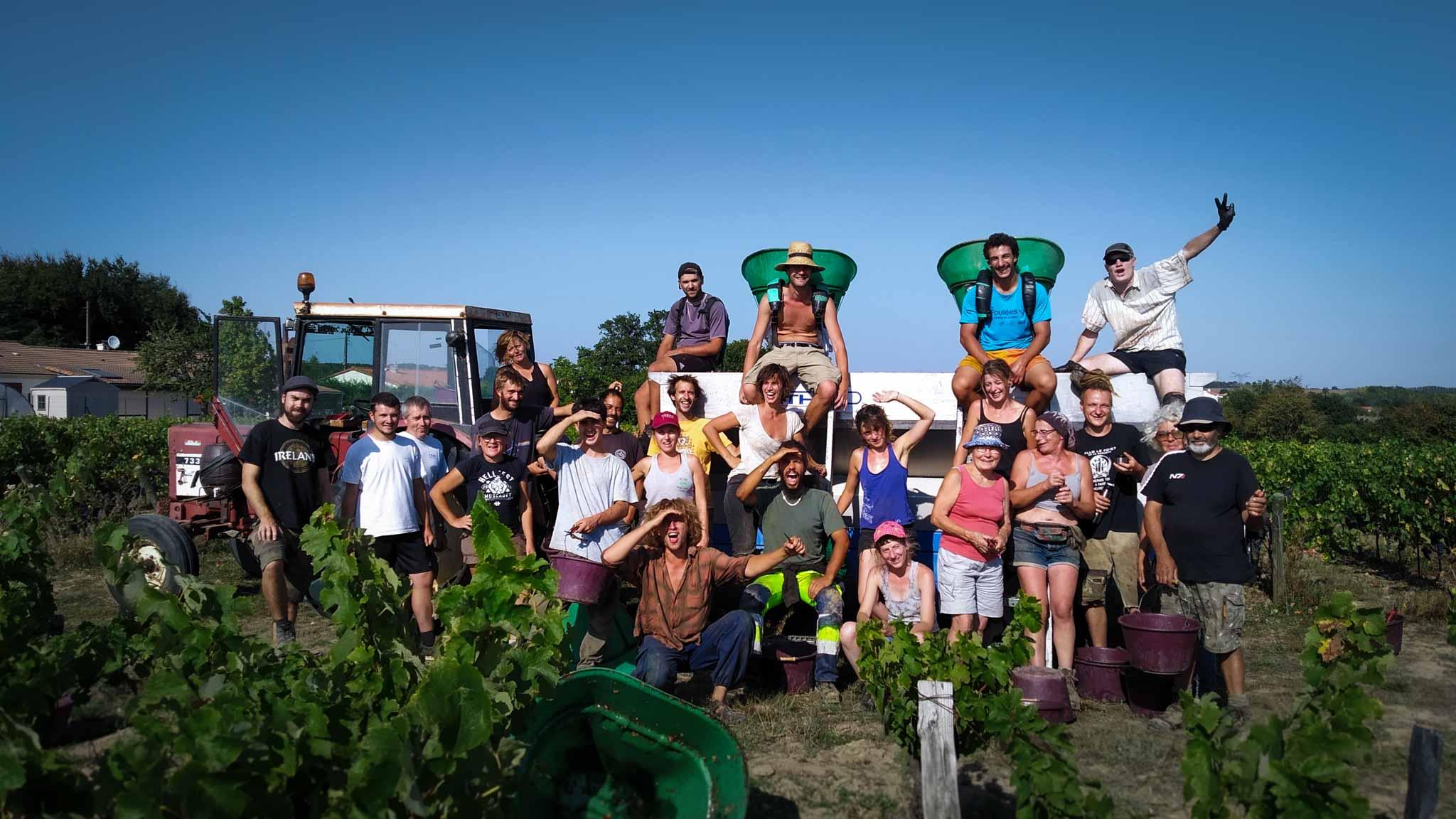 Groupe de vendangeurs dans les vignes